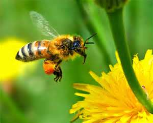 Honey Bee keeping Classes